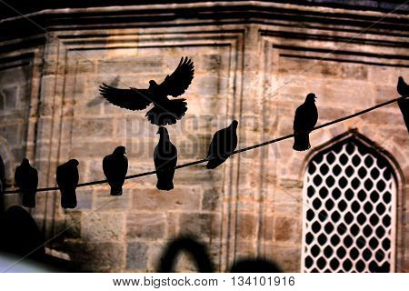 A Dark Shadow of a Bird Spreading its Wings over the Others in front of an Ancient Mosque