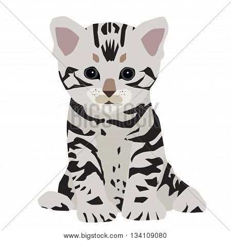 Cute American shorthair cat kitten. Vector illustration. EPS10