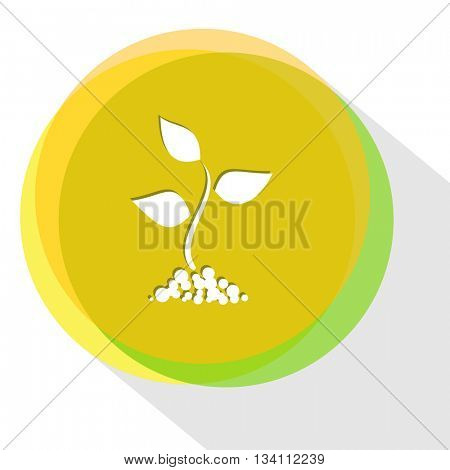 sprout. Internet template. Vector icon.