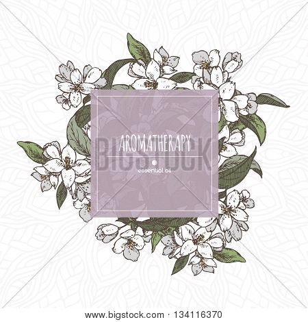 Elegant center frame template with color Jasminum officinale aka common jasmine sketch. Aromatherapy series. Great for traditional medicine, perfume design, cooking or gardening.