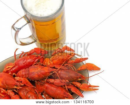 crayfish and beer closeup on a white background. horizontal photo.