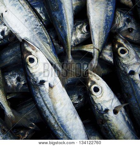 School Of Fish Caught Sea Concept