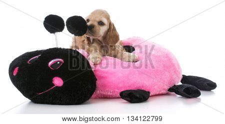 american cocker spaniel puppy on a dog bed