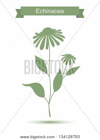 Echinacea plant with flowers silhouette. Vector illustration isolated on white