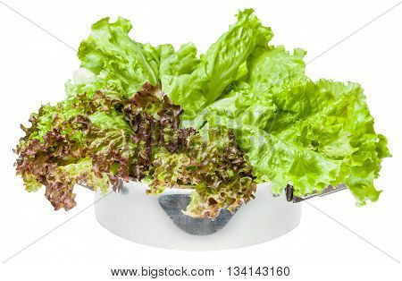 Raw Green Leaves Of Lollo Rosso And Leaf Lettuce