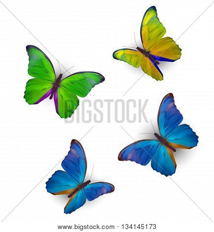 Butterfly Set Isolated on White Realistic Vector Illustration EPS10