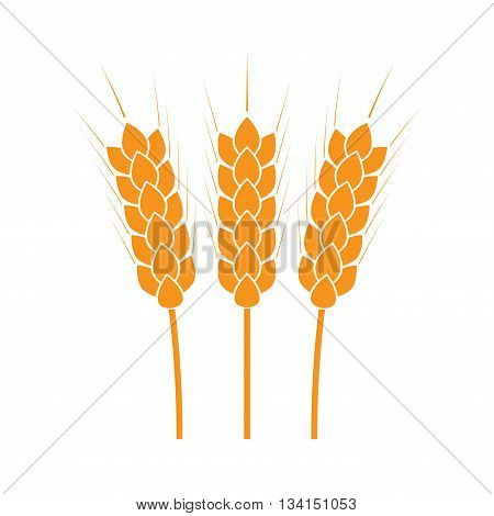 Wheat ears or rice icon. Agricultural and crop symbols isolated on white background. Design element for bread packaging or beer label. Colorful vector illustration.