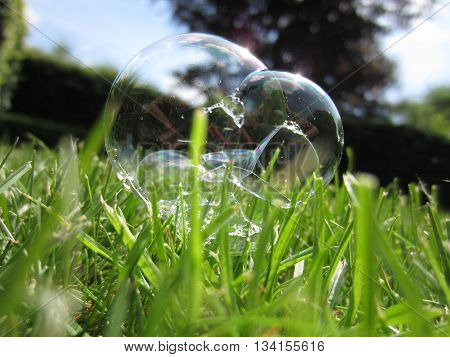 Soap bubble laying on the lawn in the grass