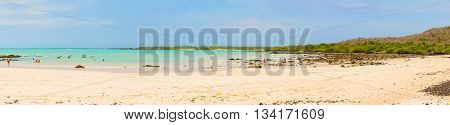 Panorama Of The El Garrapatero Beach On Santa Cruz Island In Galapagos.