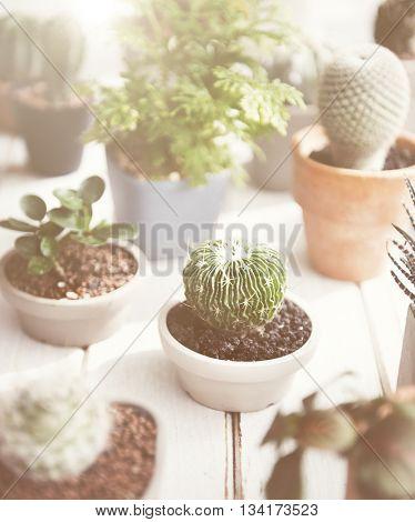 Cactus Various Kind Nature Houseplant Fresh Concept