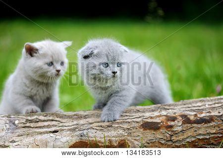 Two Gray Kitten On Tree