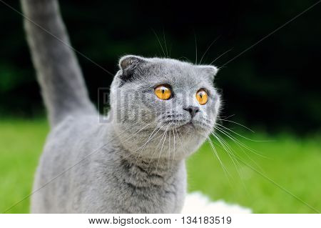 Gray Cat On Nature