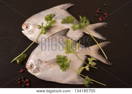 Fresh pomfret garnished with peppercorns and coriander on black background