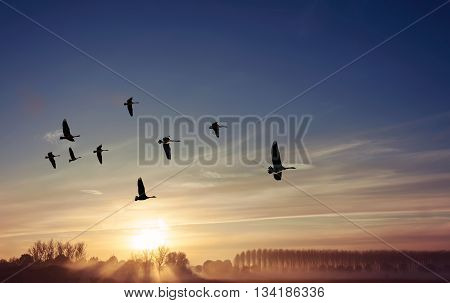 Sandhill cranes at sunrise or sunset spring or autumn concept