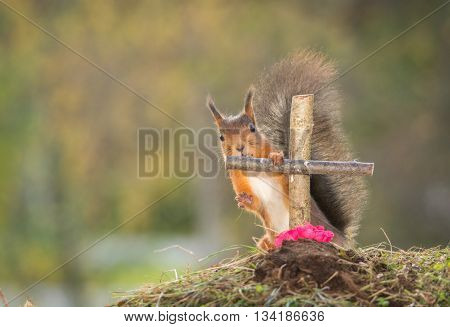 red squirrel standing with a grave touching a cross