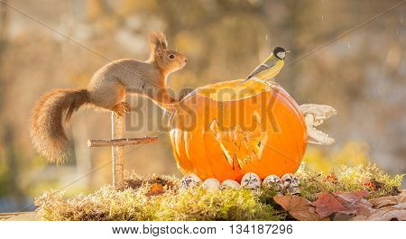 red squirrel standing on a cross and pumpkin head watching a bird with little rain drops