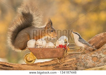 red squirrel standing on a tree trunk with wheelbarrow nuthatch and skulls