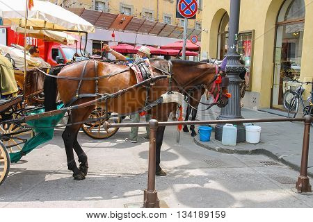 Pisa Italy - June 29 2015: Horse-drawn carriages on Piazza del Duomo. Province Pisa Tuscany region of Italy