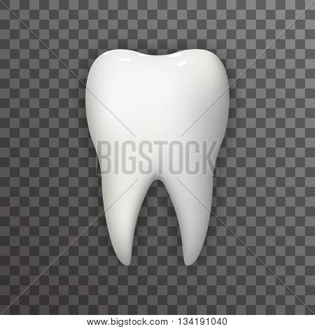 Realistic Tooth Poster Transperent Stomatology Icon Template Background Mock Up Design Vector Illustration