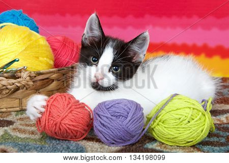 Black and white tabby kitten on carpet floor bright striped background balls of yarn in a basket holding yarn with one paw.