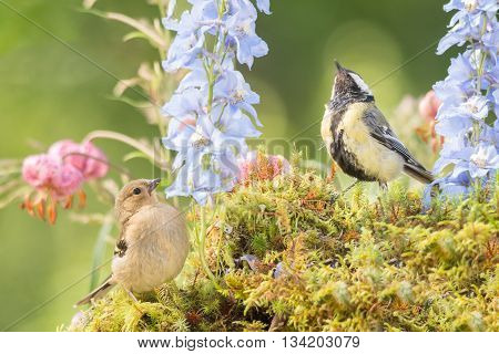 tit and young bullfinch are standing with flowers looking up