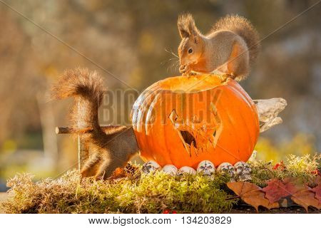 two red squirrels standing on a tree trunk with a pumpkin head
