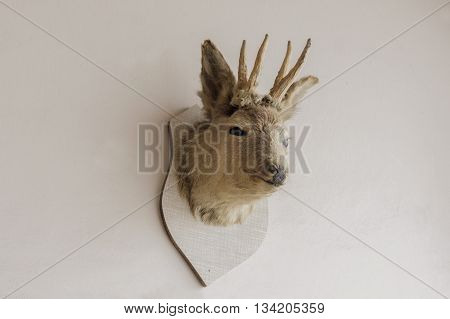 Hunting trophy of a deer head on wall