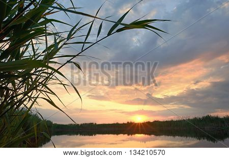 Reed against the sunset in Danube Delta