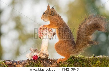 red squirrel standing with mushroom with mouse beneath