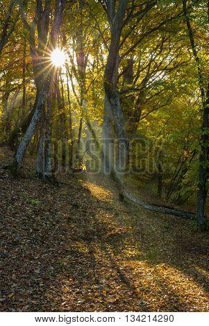 Morning in a beech forest in Ukraine.