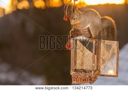 red squirrel standing on storm lamp in sun light