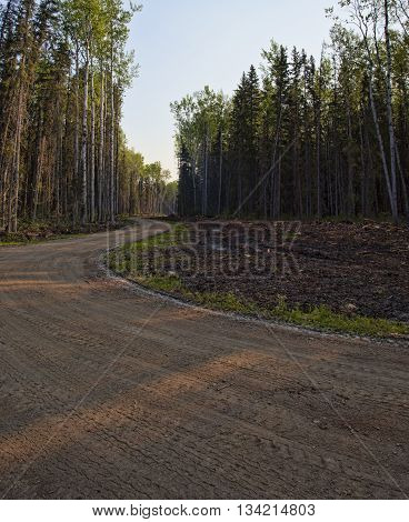 Dirt road that is winding through a thick stand of trees