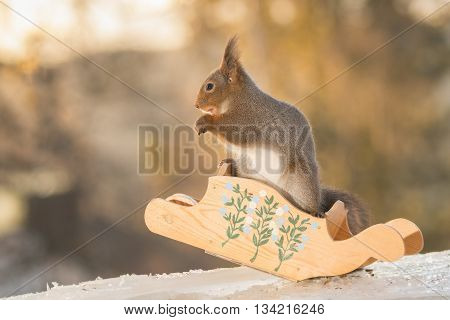 red squirrel gliding down in sledge on ice