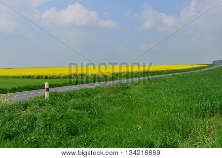 Martainville France - may 13 2016 : road and rape field