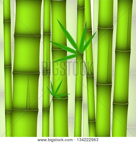 green bamboo stems and twig with leaves