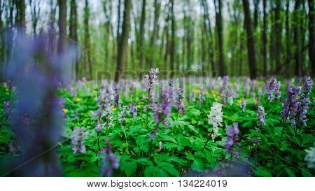 A clearing in the woods with flowers