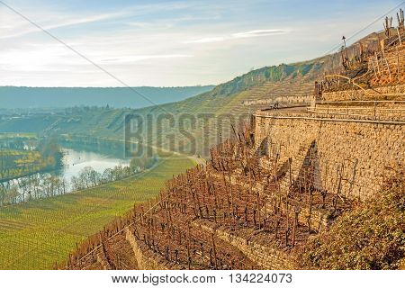View over the vineyards (Hessigheimer Felsengaerten) - blue sky