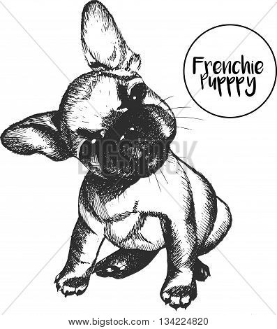 Vector close up portrait of french bulldog. Hand drawn domestic pet dog illustration. Isolated on white background.