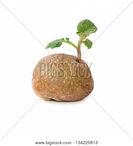 Potato with sprouts and leaves isolated on white background