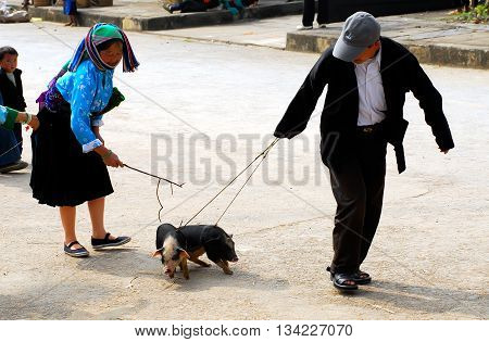 HA GIANG, VIET NAM, January 15, 2016 couples, ethnic Hmong, Ha Giang mountainous region, Vietnam. Putting pigs, down markets