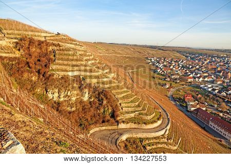 View over the vineyards (Hessigheimer Felsengaerten) town Hessigheim on the right
