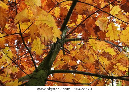 Autumn leaves on the tree