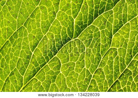 green leaf texture with illness. soft focus