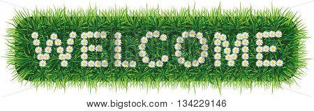 Daisy letters WELCOME on grass. Надпись из ромашек WELCOME  на травяном фоне.