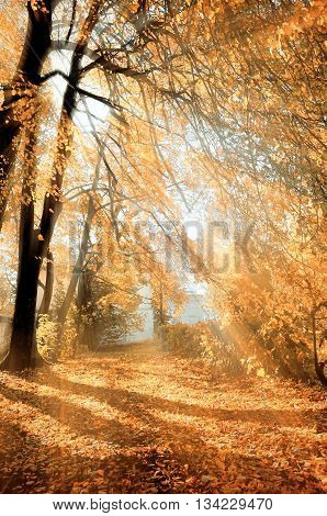 Autumn park with fallen leaves in bright sunshine- colorful autumn landscape in nice sunny weather picturesque autumn landscape view