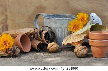 dead leaves nuts little pots and watering can on wooden background