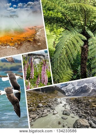 Collage Of New Zealand Images - Travel Background (my Photos)