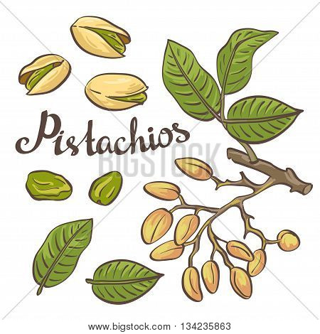 Pistachio nuts with leaves and pistachio tree. Vector illustration.