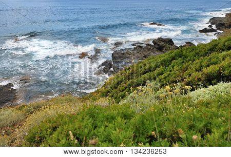 coast of Cap Corsica between sea and bush