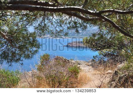 blue sea in Corsica trought the pine branches